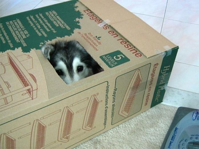 dog with a cat-like behavior