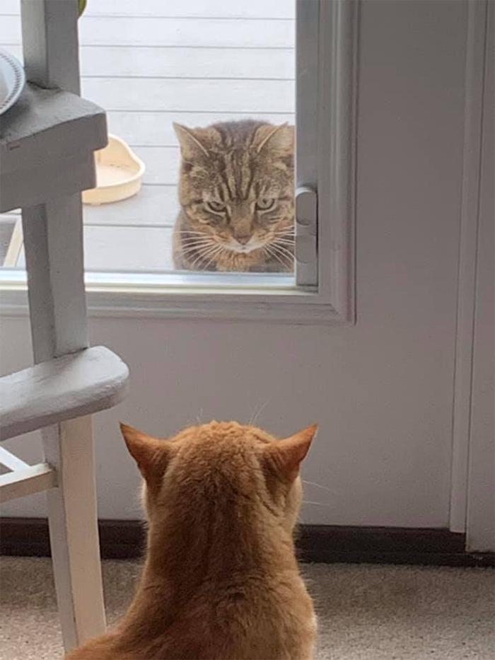 feline intruders in parents house