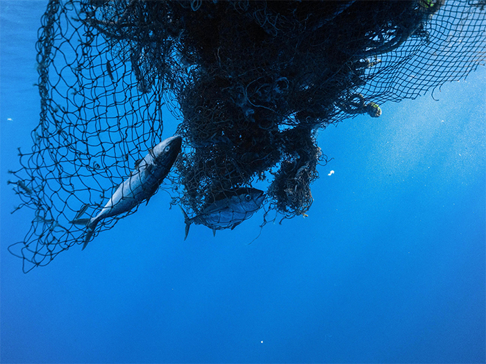 fishes trapped in ghost nets