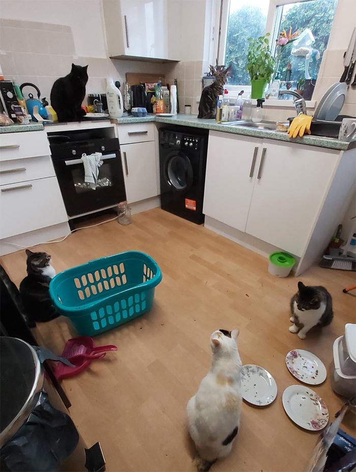 five kitties in my kitchen