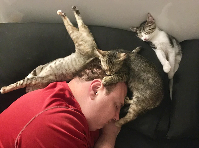 14 Sleeping Cat Positions and What they Reveal about Your Kitty