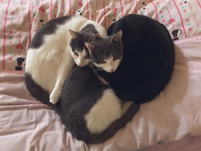 foster kitties heart shape