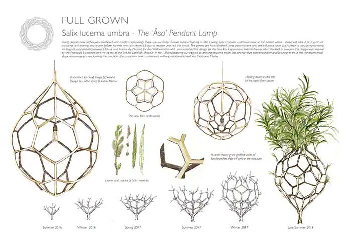 full grown pendant lamp