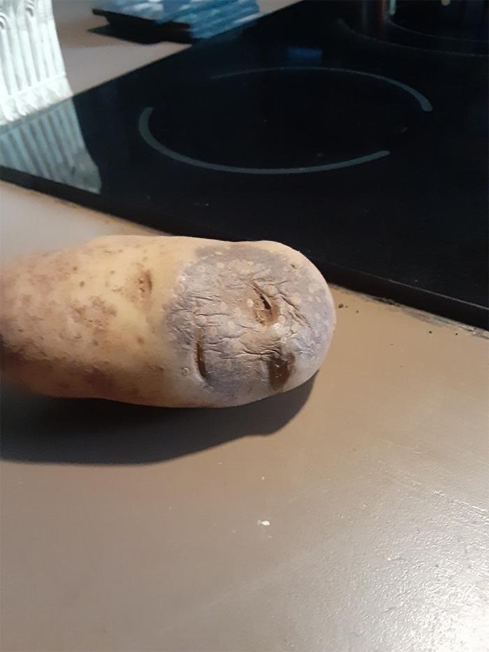 funny pareidolia baked potato