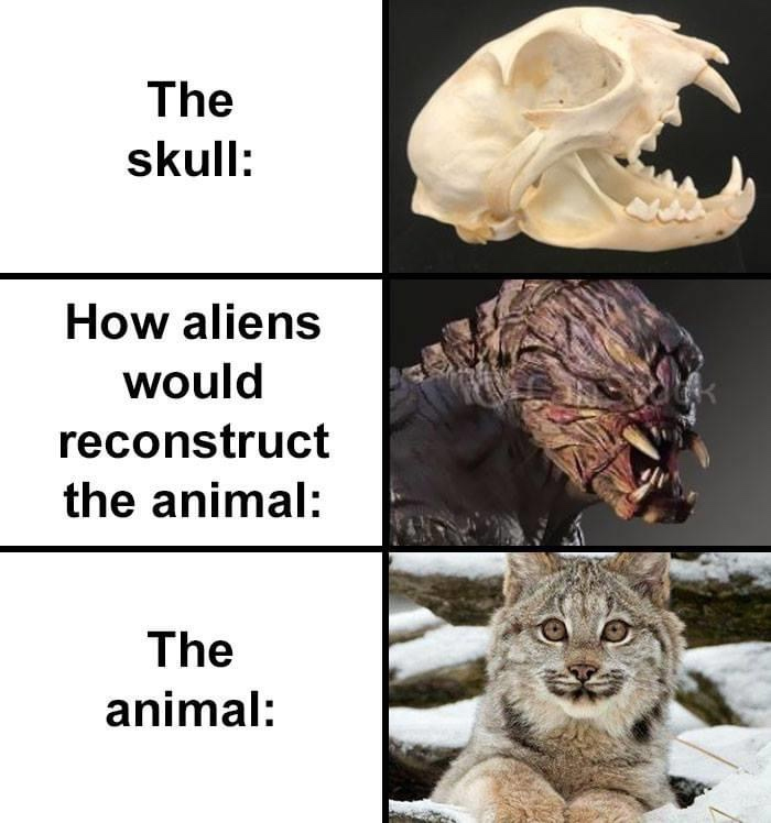 hilarious skull reconstruction of a wild feline