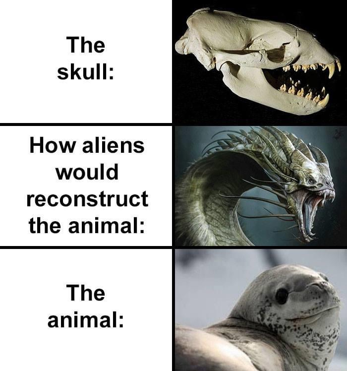 how aliens would reconstruct sea lion skull