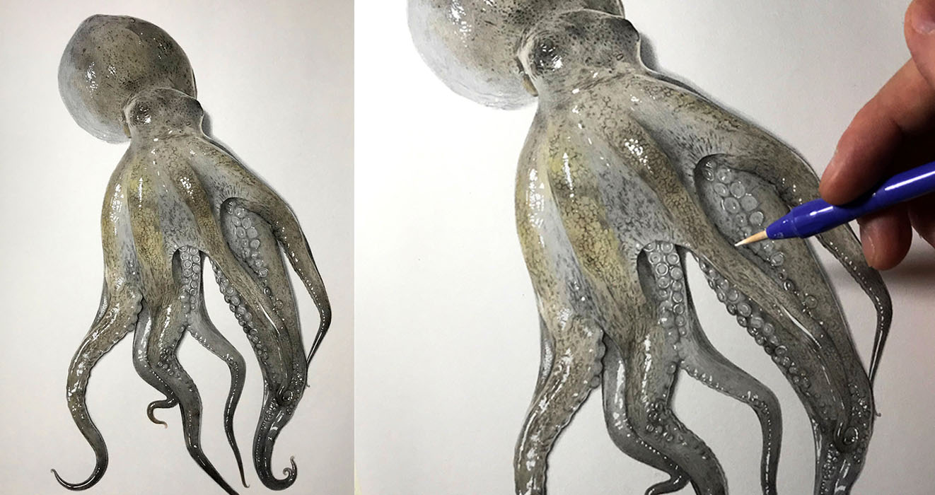 Japanese Artist Illustrates Step By Step Process On Drawing A Realistic Octopus Contour the octopus, trying to vary the thickness and darkness of the line. drawing a realistic octopus
