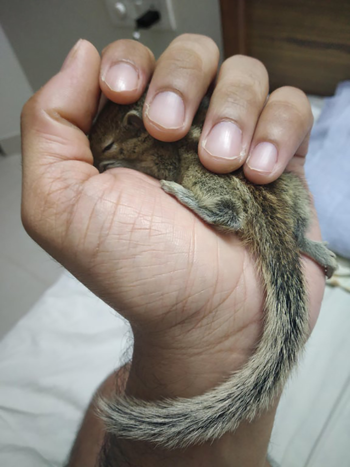 human hand holding a rodent
