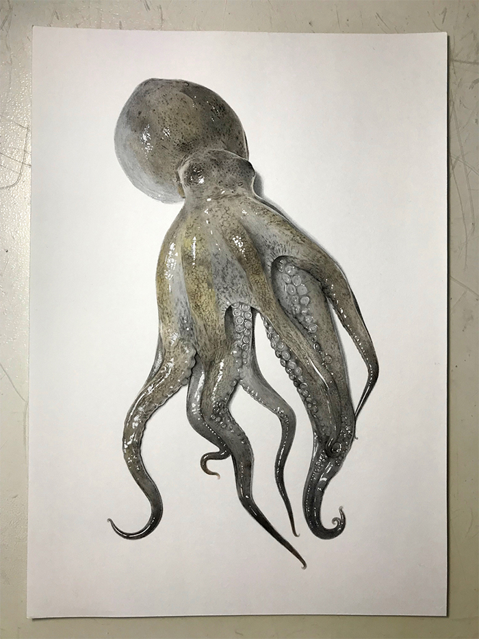 hyperrealistic octopus drawing