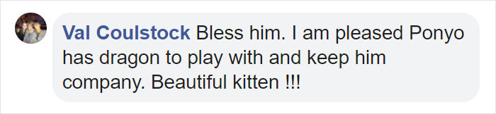 kitten and plush toy bff comment val
