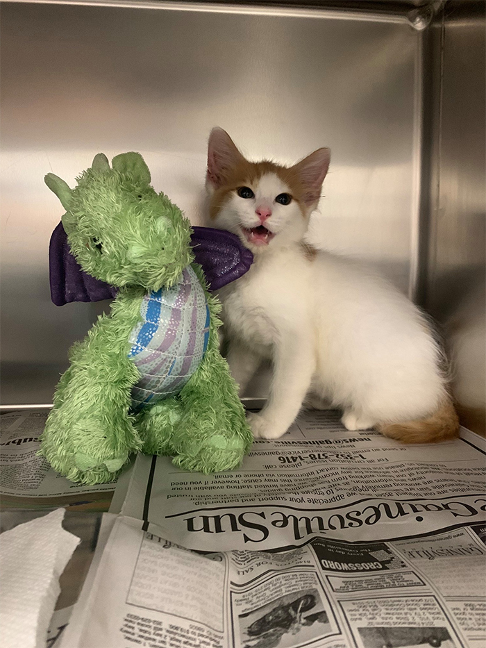 kitten and stuffed dragon best friends