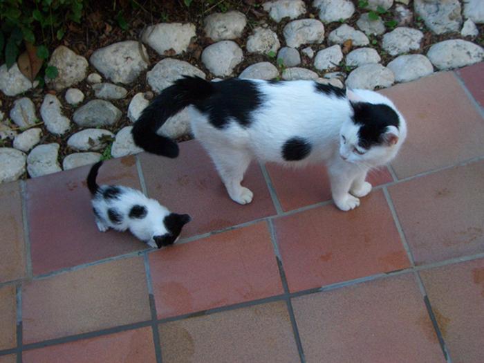 kitten following its mother