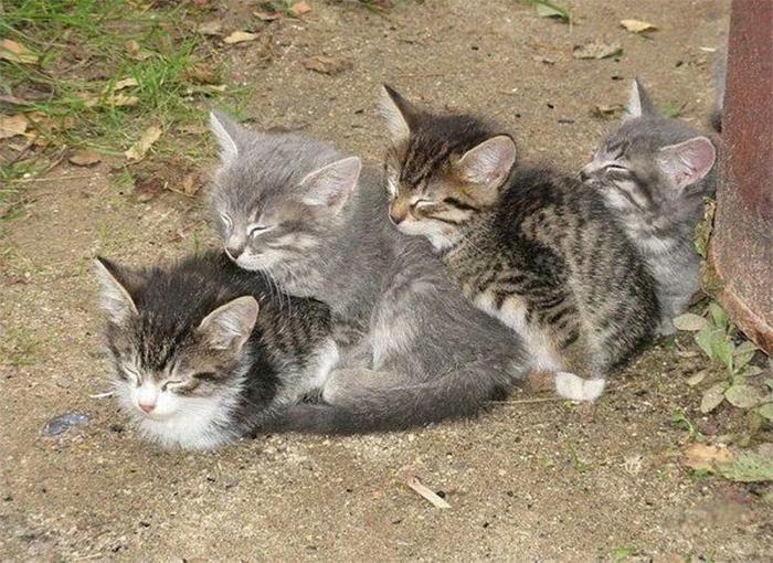 kittens sleeping train