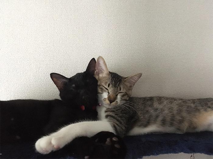 kitties sleeping cheek to cheek