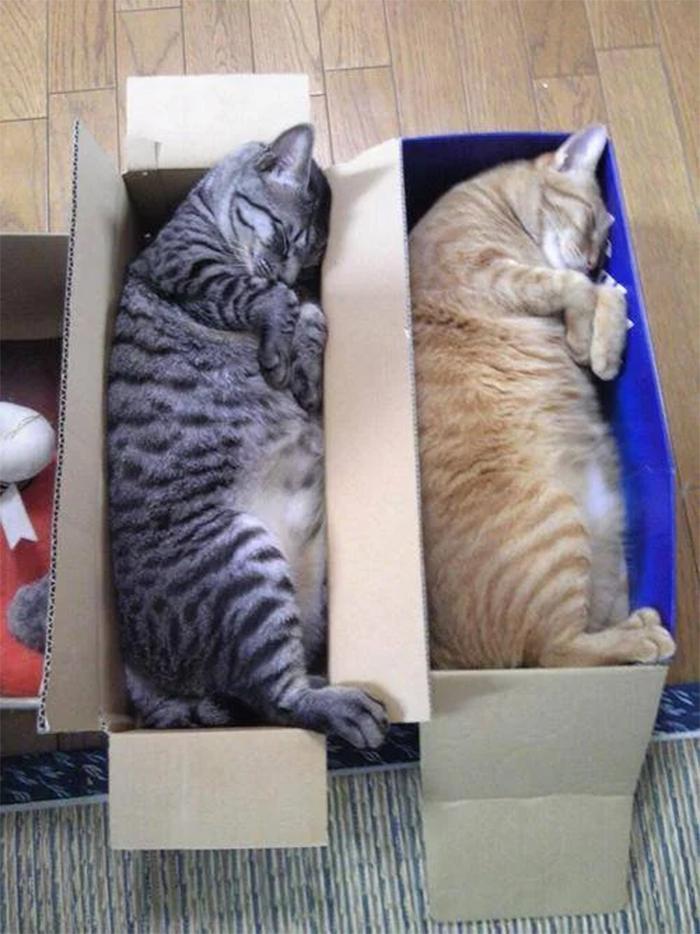 kitties sleeping in shoe boxes