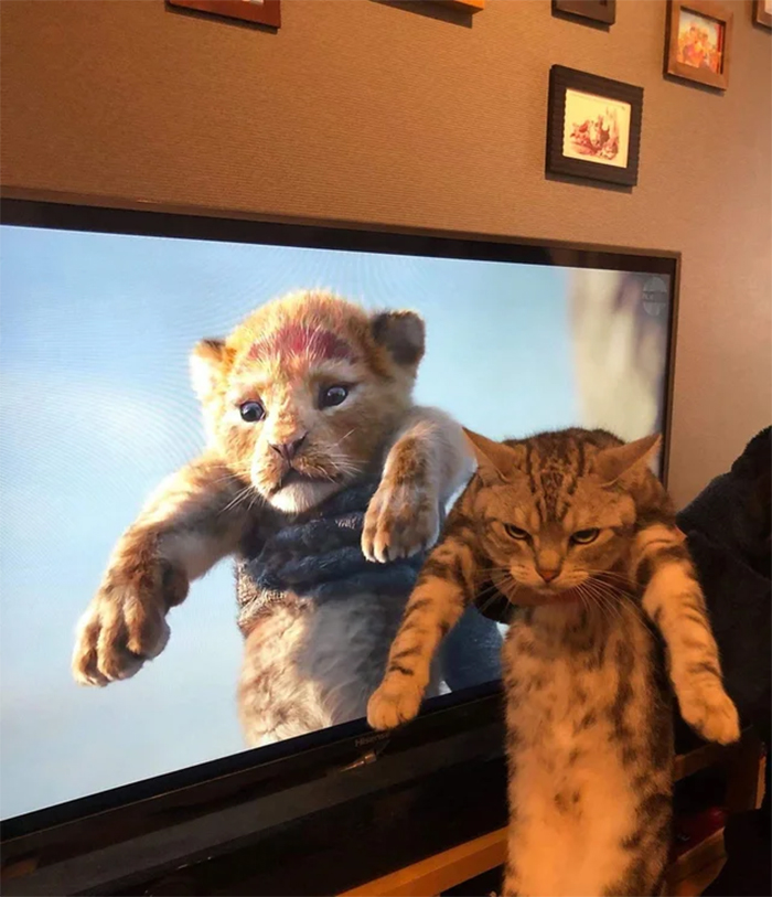 lion king movie vs real life