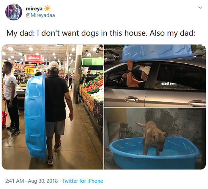 man buys portable pool for his dog