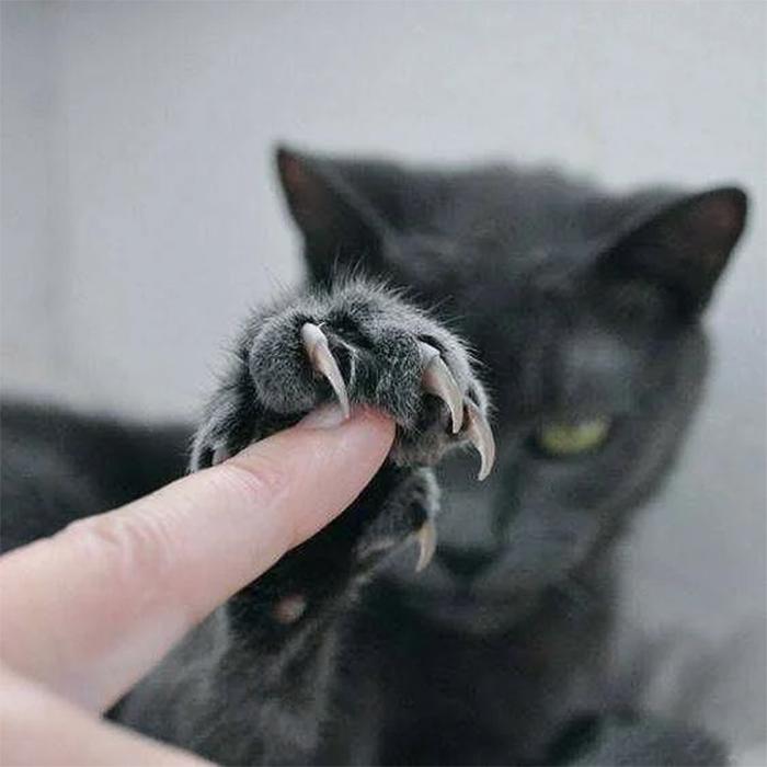 murder mittens feline wolverine