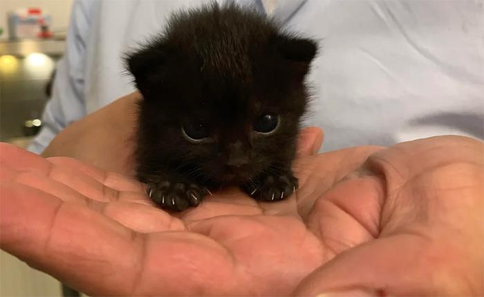 murder mittens little murderer cute kitten