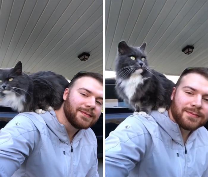 my carport not my cat