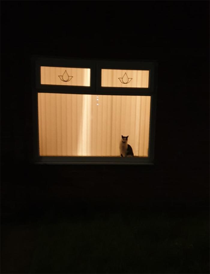 my cat not my house