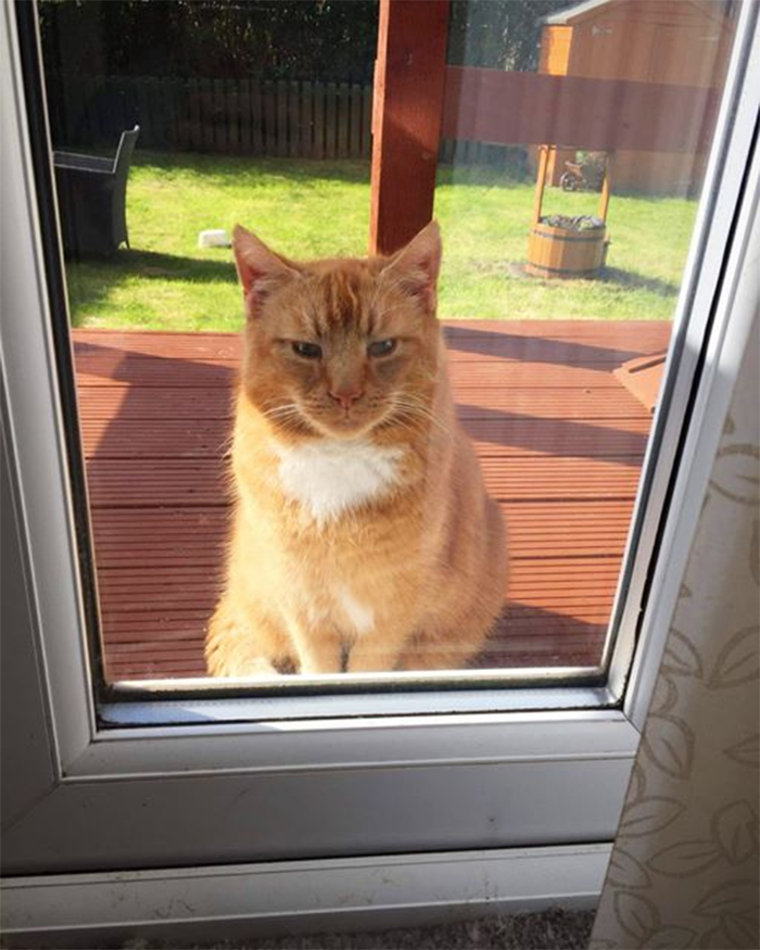 my house not my cat fluffy ginger kitty sitting on decking