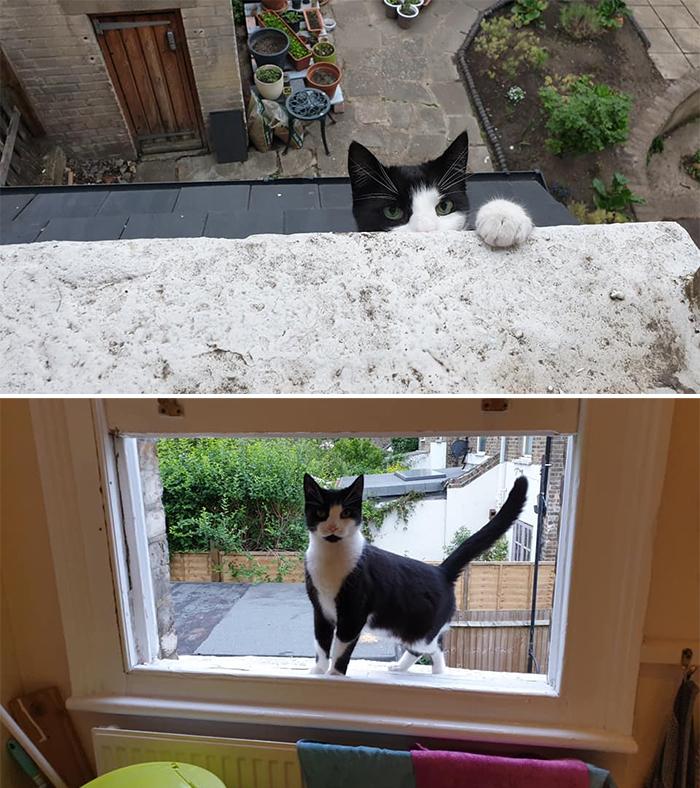 my house not my cat peeking at the window edge