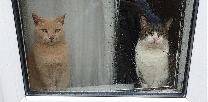 my house not my cat window