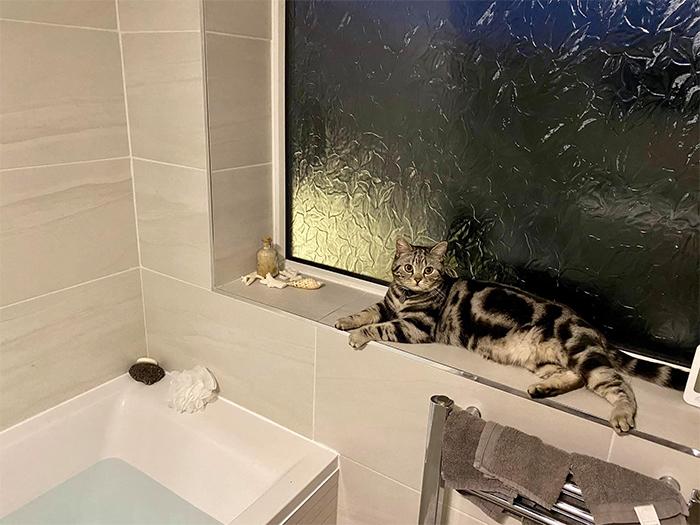 neighbor kitty in my bathroom