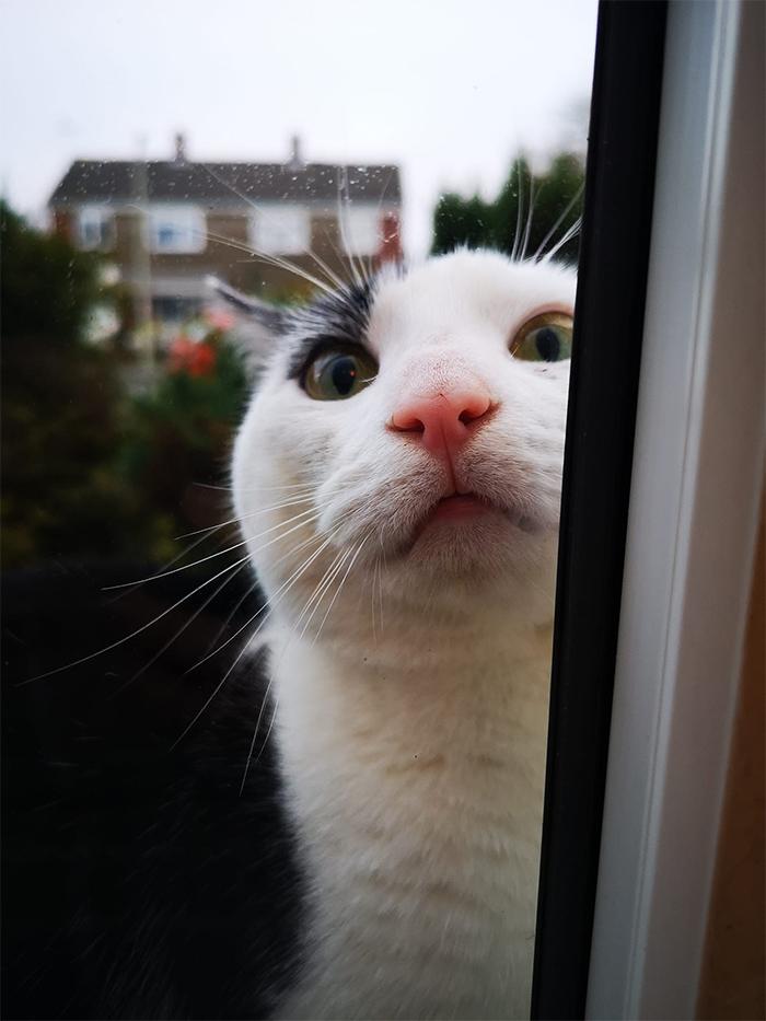 neighborhood kitty pays a visit