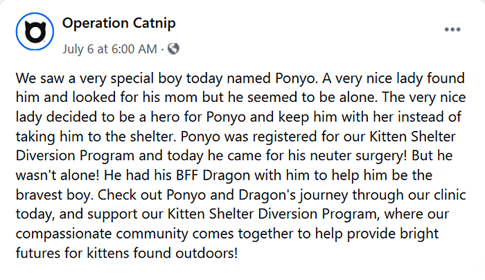 operation catnip ponyo story post
