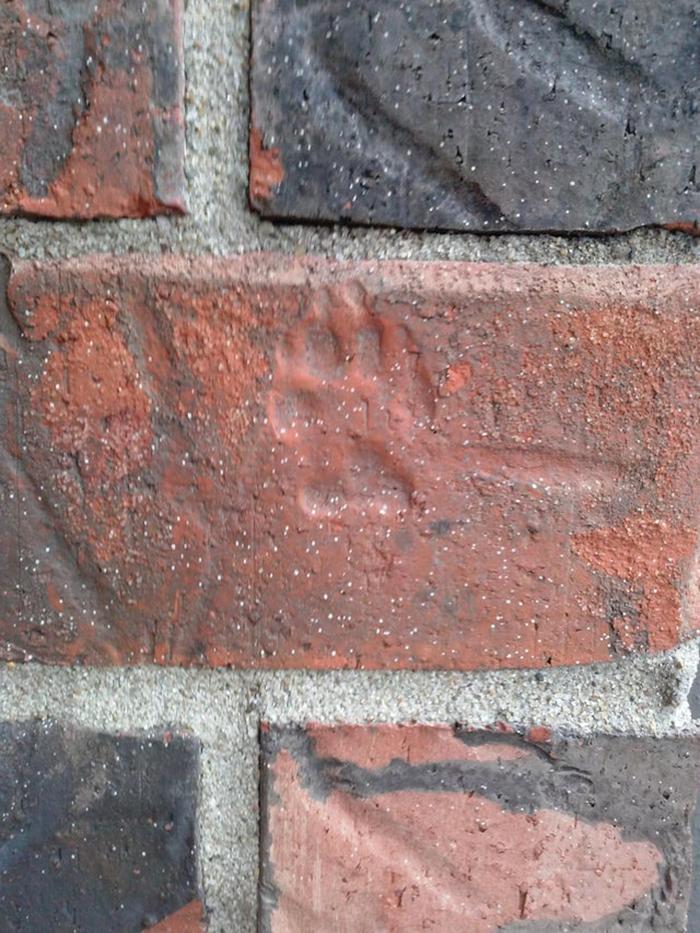 paw print on brick wall