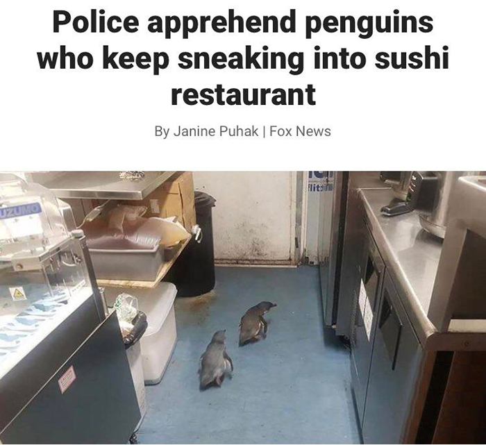 penguins sneaking into sushi restaurant