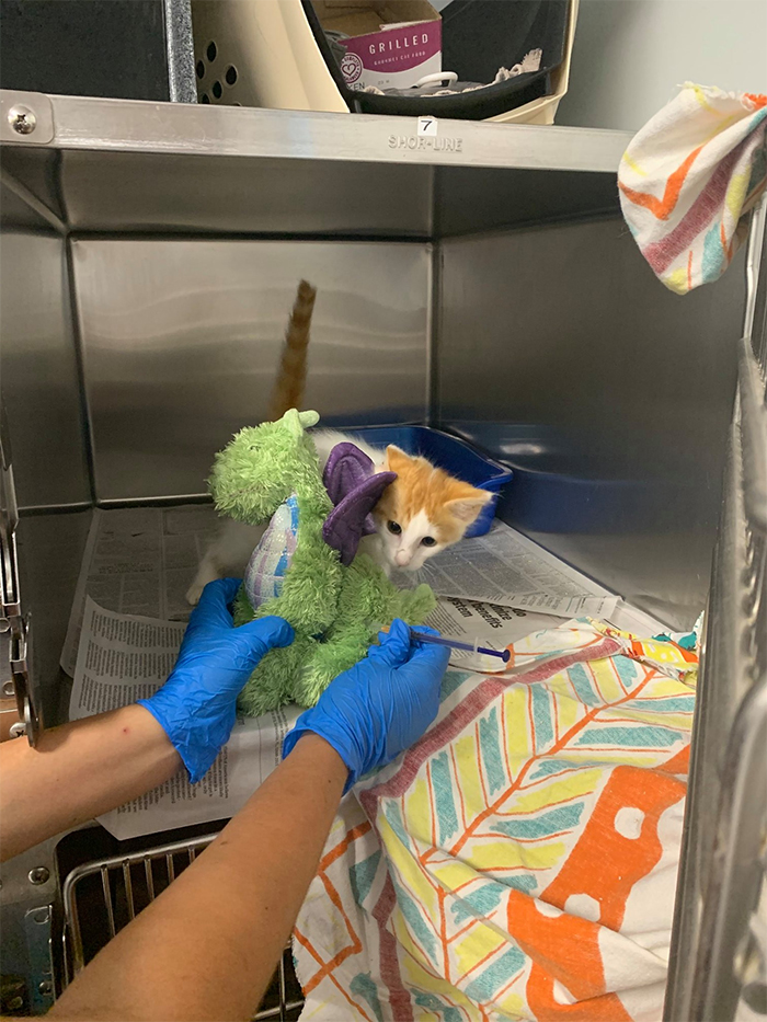 plush toy helps kitten get through surgery