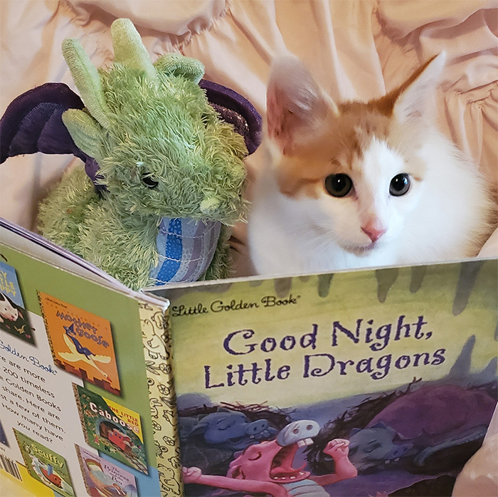 ponyo kitten and plush toy reading a book