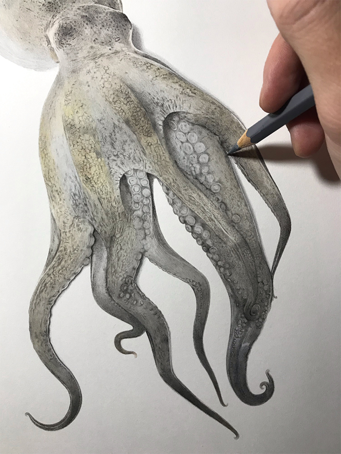 realisitc drawing octopus colored pencil