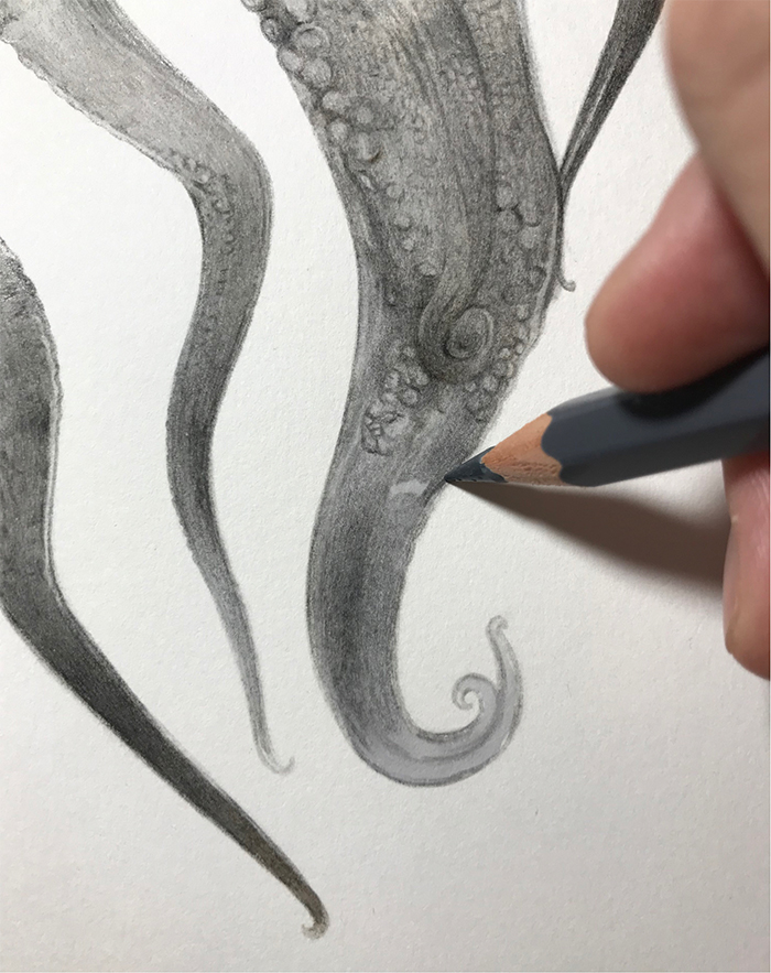 realisitc drawing tentacle curls