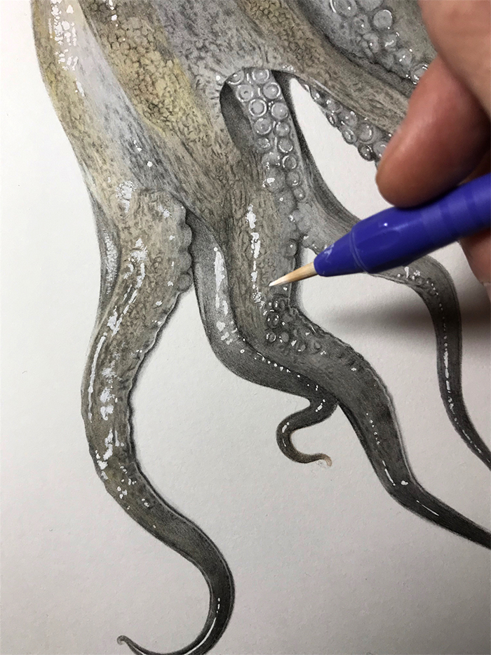 realisitc octopus drawing tentacles