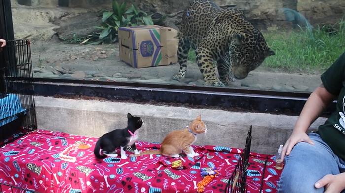 rescue animals field trip to san antonio zoo