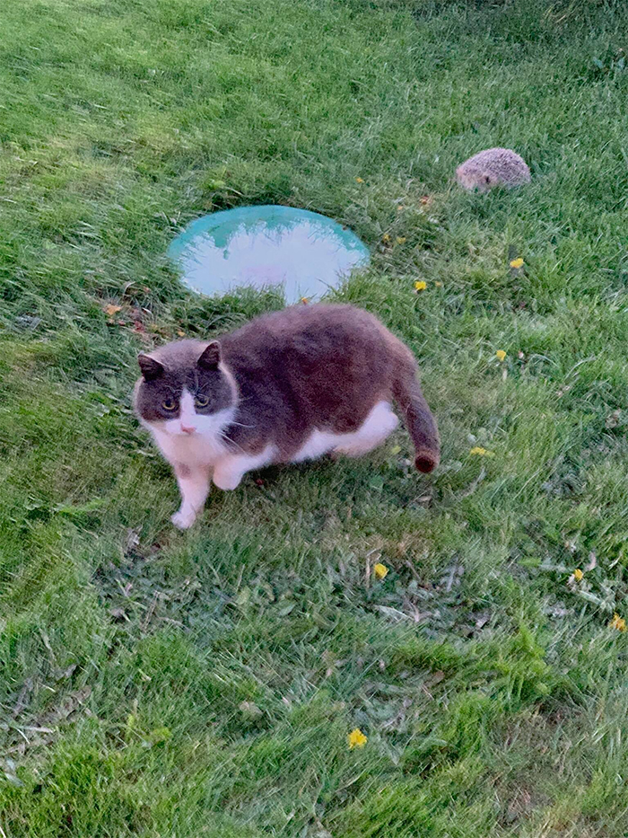 resident stray with a hedgehog friend