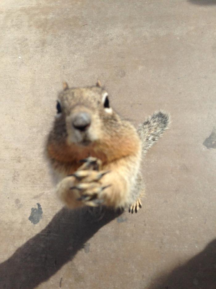 rodent begging for popcorn