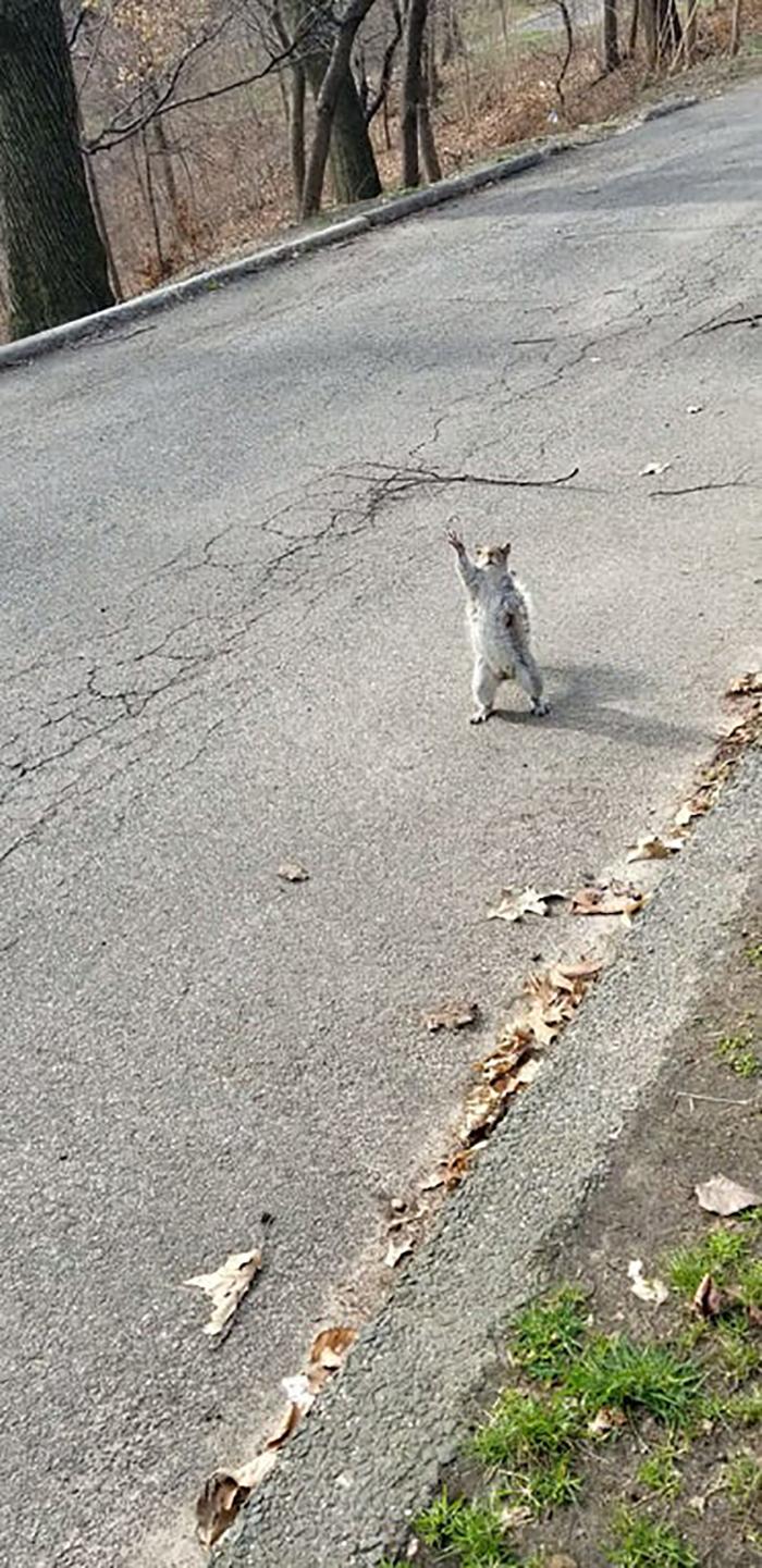 rodent raising hand