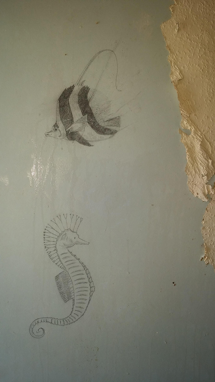 sea creature drawings discovered under a wallpaper
