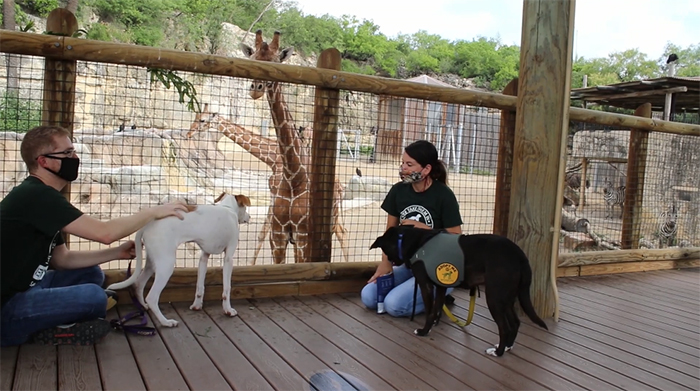 shelter dogs on a field trip at san antonio zoo