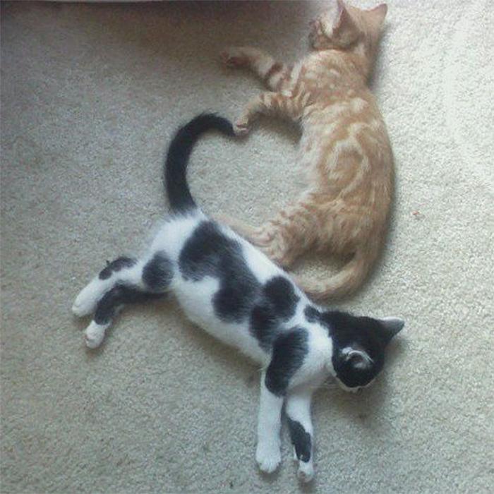 sleeping kittens form a heart shape