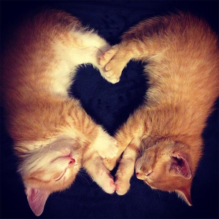 sleeping kitties form heart shape