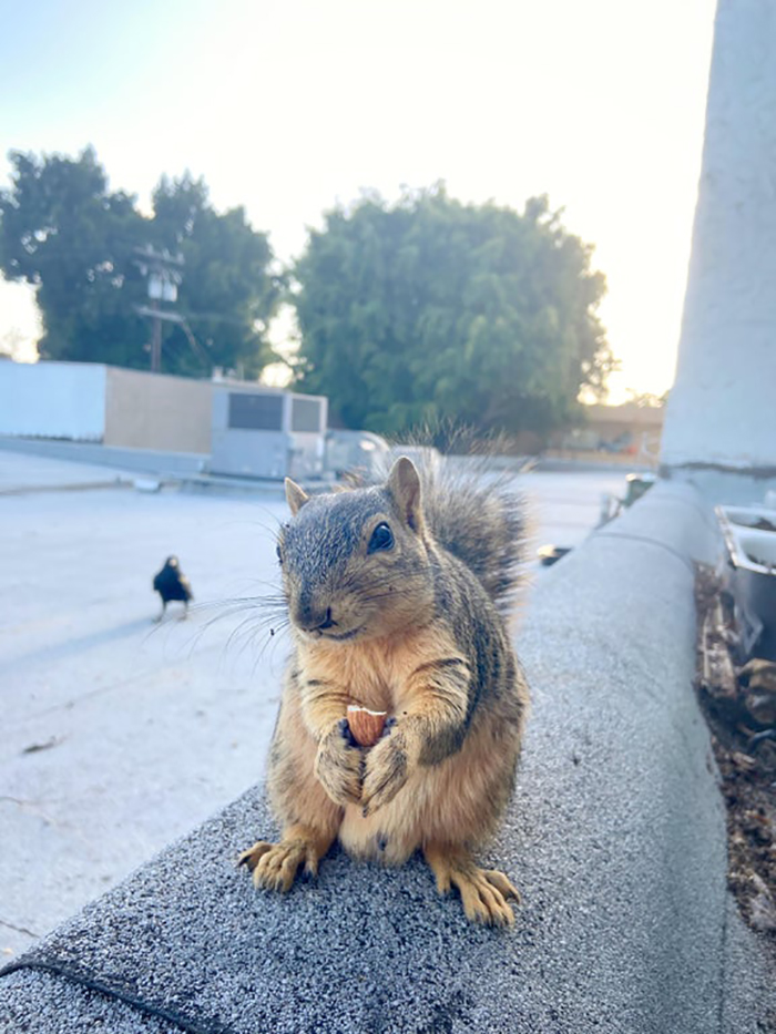 squirrel holding an almond