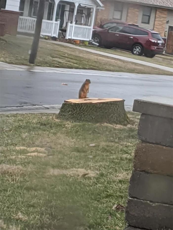 squirrel home tree cut down