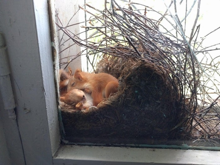 squirrels on nest