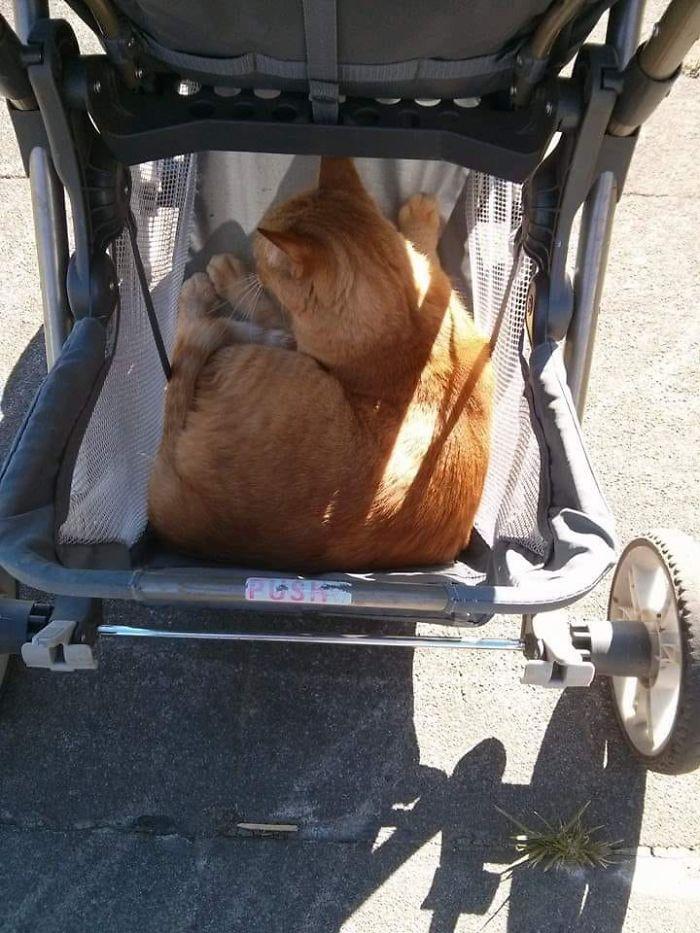strange kitty in my stroller